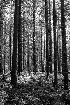 Ein Wald in Schwarz-Weiß von Gerard de Zwaan
