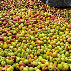 hill of apples van Heinz Grates