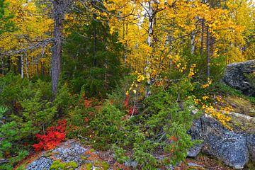 Herfst in Zweeds Lapland van Thomas Zacharias