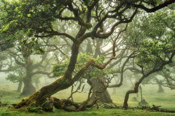 Bos in de mist op Madeira van Martin Podt