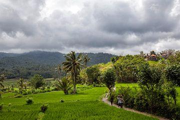 Frauen gehen zwischen grünen Reisfeldern auf der Insel Bali nach Hause. von Tjeerd Kruse