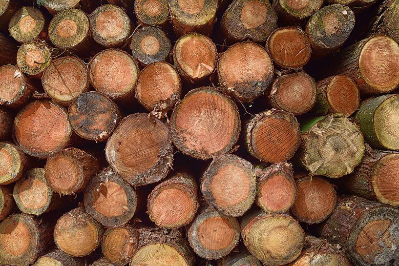 Houtstapel van boomstammen von Jessica Berendsen