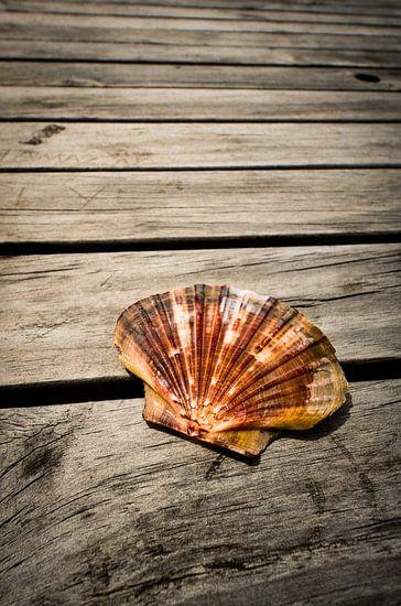 Sint-Jakobsschelp van Ricardo Bouman | Fotografie