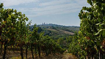 De wijngaarden van San Gimignano, Toscane van Robbert De Reus
