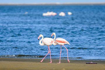 Flamingos in Walvisbay van Jurgen Hermse