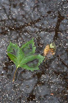 Platanenblad in een plas water met reflectie van kale takken van Danielle Roeleveld