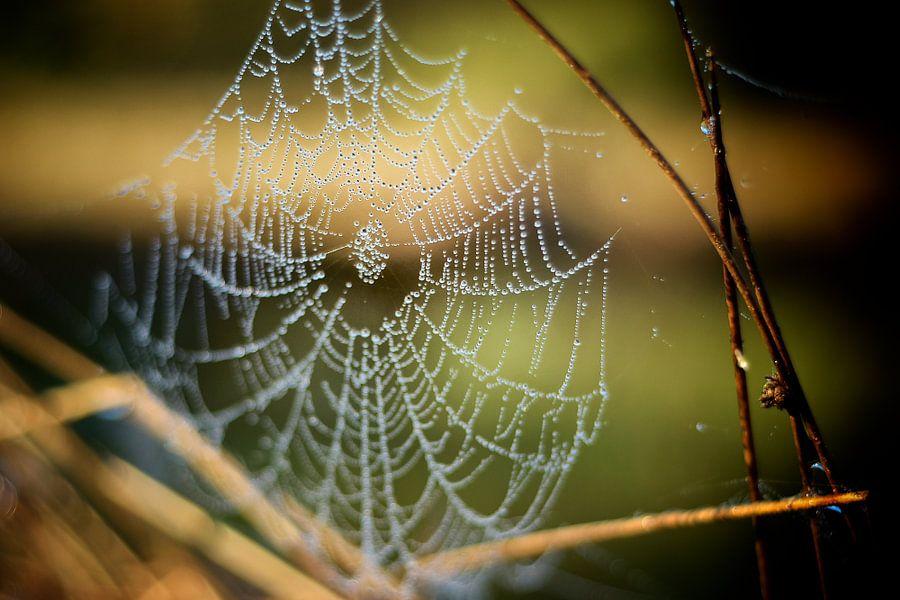 spinnenweb van Eveline Lenderink