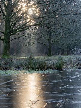 Eerste wintermorgen van Herman Heus