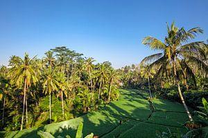 Rijstterras in de zomer, Bali, Indonesië