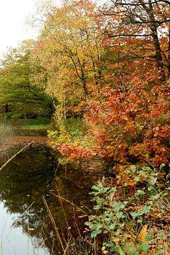 Herfst 6 van Ronald Hulsebos