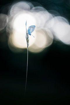 Butterfly at a setting sun van Bob Daalder