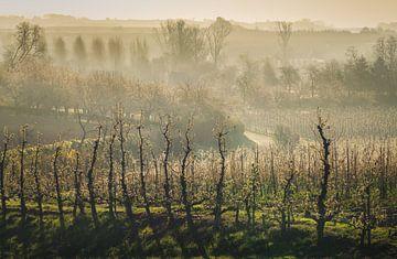 Bevroren bloesems van Joris Pannemans - Loris Photography