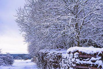 Verse sneeuw! van Nynke Nicolai