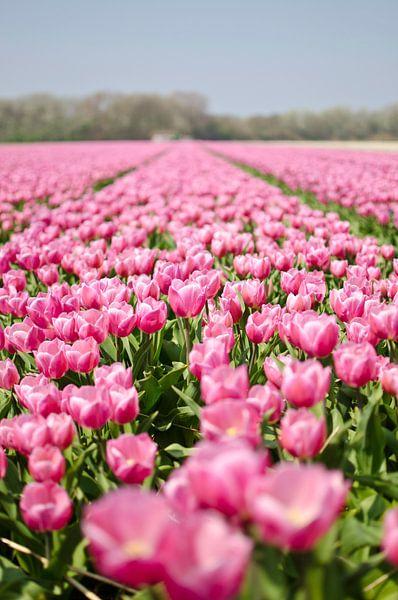 Hollandse tulpenveld van Ricardo Bouman