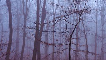 Minimalistische foto van een jonge boom in de mist