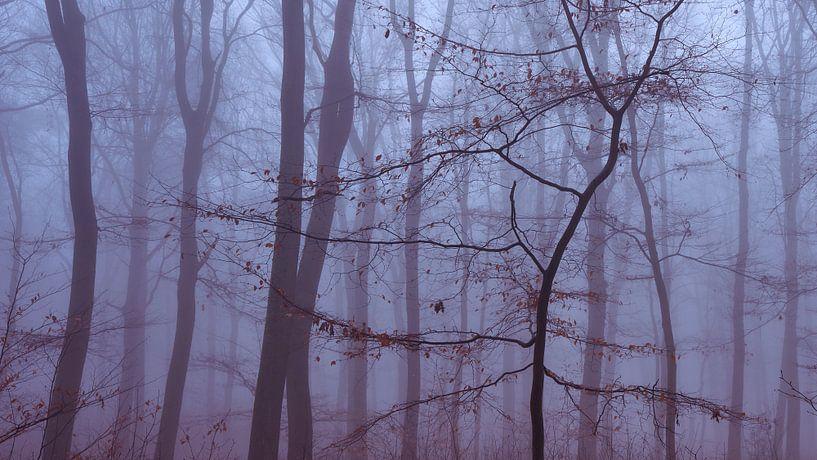 Minimalistische foto van een jonge boom in de mist van Epic Photography
