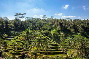 Tegallalang rijstterrassen in de omgeving van Ubud op Bali, Indonesië
