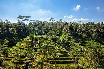 Tegallalang rijstterrassen in de omgeving van Ubud op Bali, Indonesië van Tjeerd Kruse