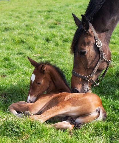Paarden Liefde.  van By Foto Joukje