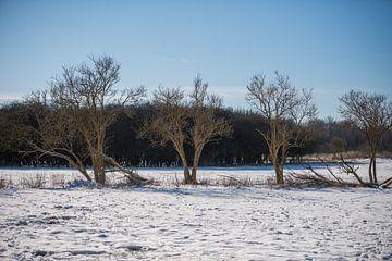 winterlandschap van Dick Carlier