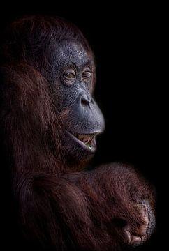 Grappige orang oetan gezicht van Ron Meijer
