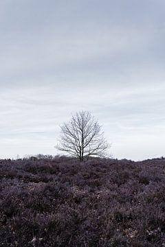 Eenzaam sur Bram Laenen
