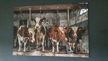 Klantfoto: Koeien in oude koeienstal van Inge Jansen