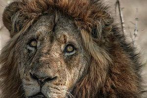Lion King van