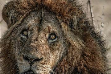Lion King von Guus Quaedvlieg