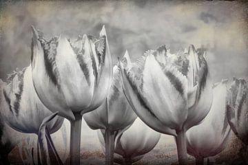 Abstrakte Tulpen in schwarz und weiß von eric van der eijk