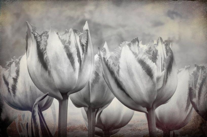 Abstracte tulpen in zwart wit van eric van der eijk
