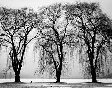 Drie bomen sur