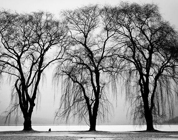 Drie bomen