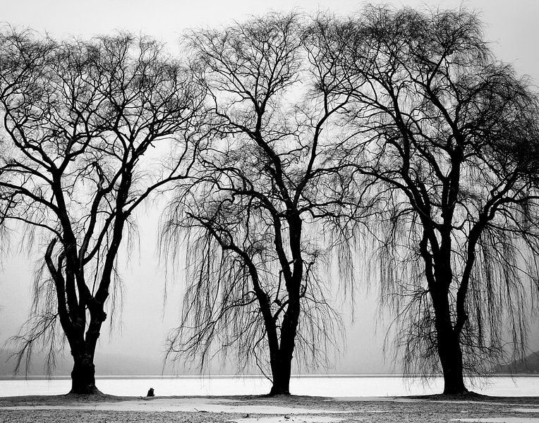 Drie bomen van Judith Robben