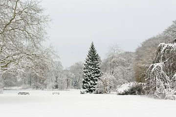 Park in de winter van