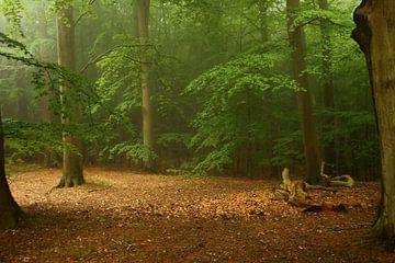 Märchenwald von Heike Hultsch