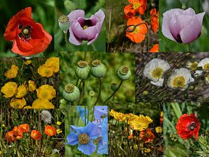 Klaproos bloemen collage van Iris Heuer