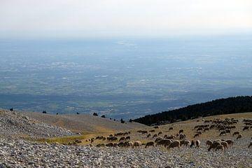 Uitzicht Mont Ventoux van Myrte Wilms