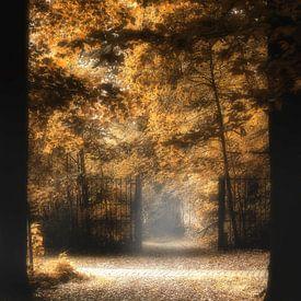 Herfst kleuren aan 't bospad von Vandain Fotografie