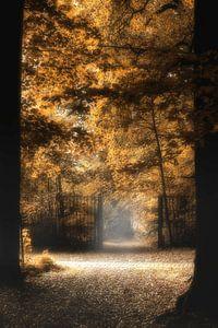 Herfst kleuren aan 't bospad van