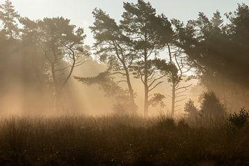 zonnestralen in de mist van Tania Perneel