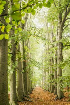 Buchenallee am Waldweg, Frühling von Frans Lemmens