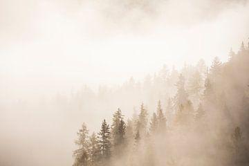 Bomen in ochtend mist van Melanie Hinz