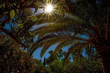 Uitzicht op palmen en groene bomen en bladeren met zonnestralen. van Edith van Aken