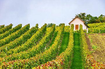Dans le vignoble en automne sur Ullrich Gnoth