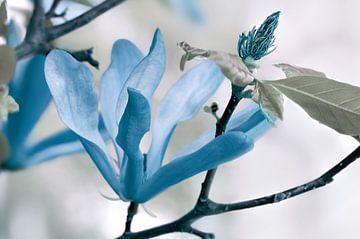 Blue  sur Violetta Honkisz