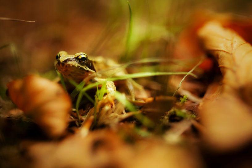 What the Frog? van Cho Tang
