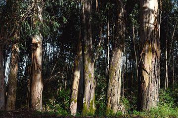 Eucalyptus van Wendy Bos