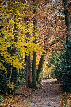 Herbstpfad von Jose Gieskes