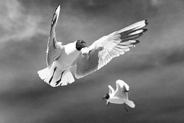 Fliegende Möwen